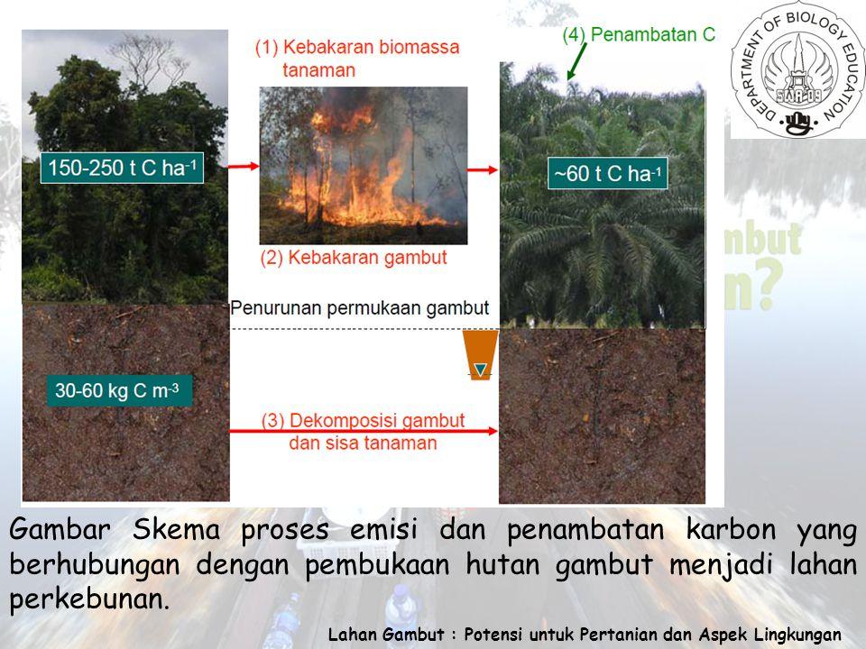 Lahan Gambut : Potensi untuk Pertanian dan Aspek Lingkungan Gambar Skema proses emisi dan penambatan karbon yang berhubungan dengan pembukaan hutan gambut menjadi lahan perkebunan.