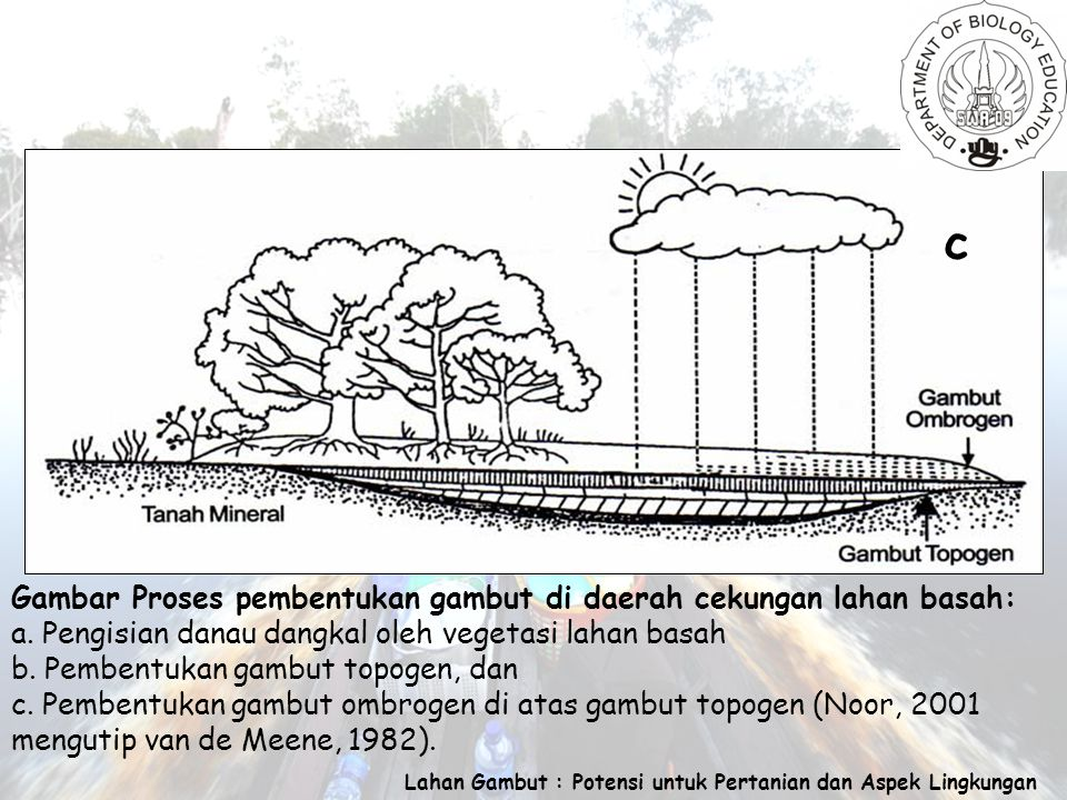 Lahan Gambut : Potensi untuk Pertanian dan Aspek Lingkungan Gambar Proses pembentukan gambut di daerah cekungan lahan basah: a.