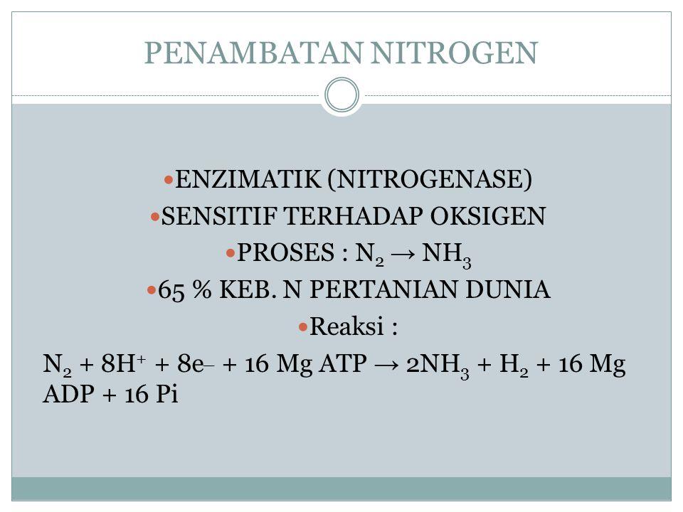 Daur nitrogen Tanaman Herbivora Organik N NH 4 + NO 3 - Fiksasi Nonsimbiotik Dekomposisi Ammonifikasi Immobilisasi Nitrifikasi Assimilasi/ disimilasi