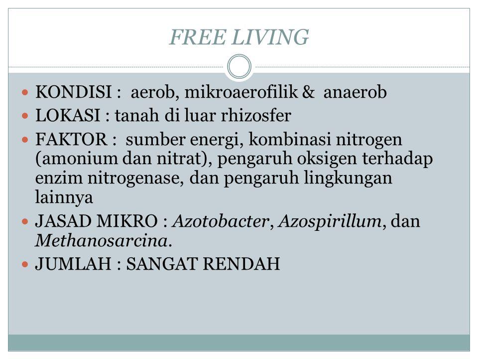 SISTEM FREE LIVING (Azotobacter sp) ASOSIASI (Azospirillum sp) SIMBIOSIS (Rhizobium sp)