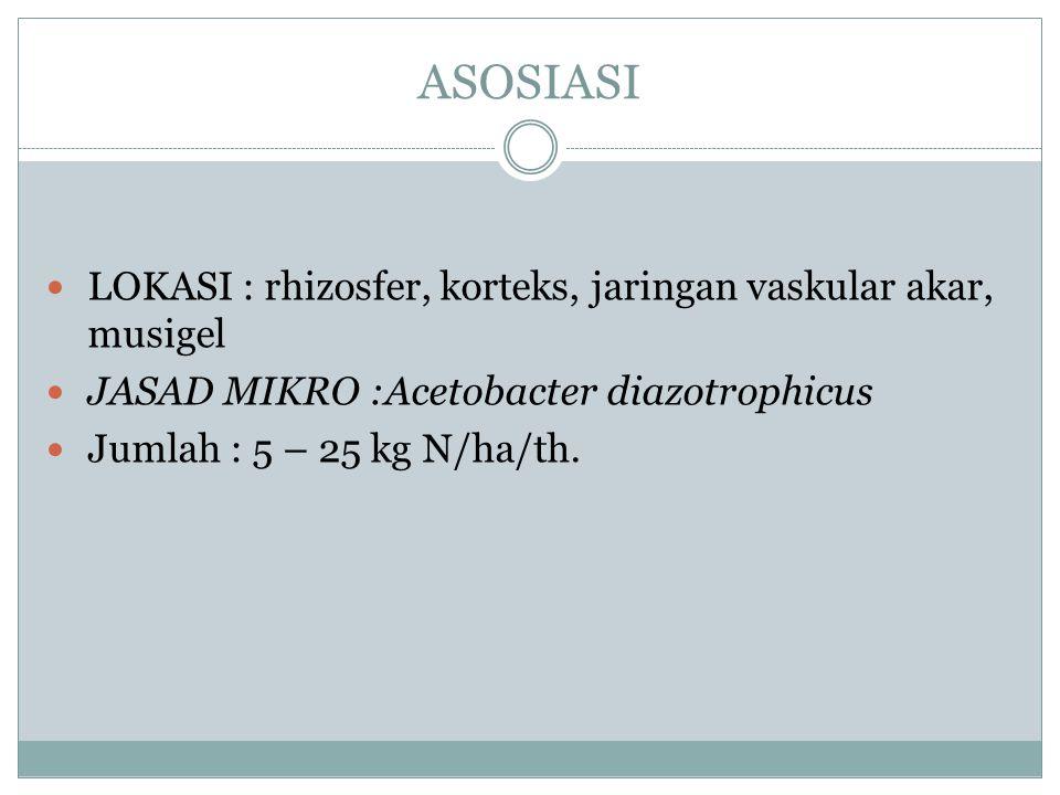FREE LIVING KONDISI : aerob, mikroaerofilik & anaerob LOKASI : tanah di luar rhizosfer FAKTOR : sumber energi, kombinasi nitrogen (amonium dan nitrat)