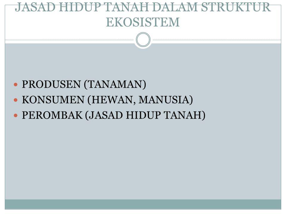 JASAD HIDUP TANAH DALAM STRUKTUR EKOSISTEM PRODUSEN (TANAMAN) KONSUMEN (HEWAN, MANUSIA) PEROMBAK (JASAD HIDUP TANAH)