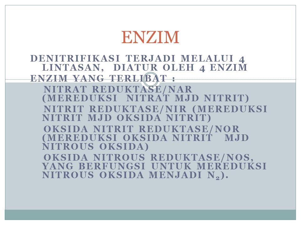 Denitrifikasi Nitrogen Definisi : reduksi nitrat menjadi gas nitrogen (N0, N 2 0 dan N 2 ) Kondisi : anaerob Bakteri : organotrof (Alcaligenes, Agroba