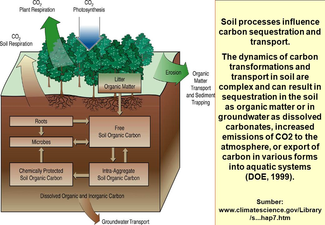 Soil processes influence carbon sequestration and transport.