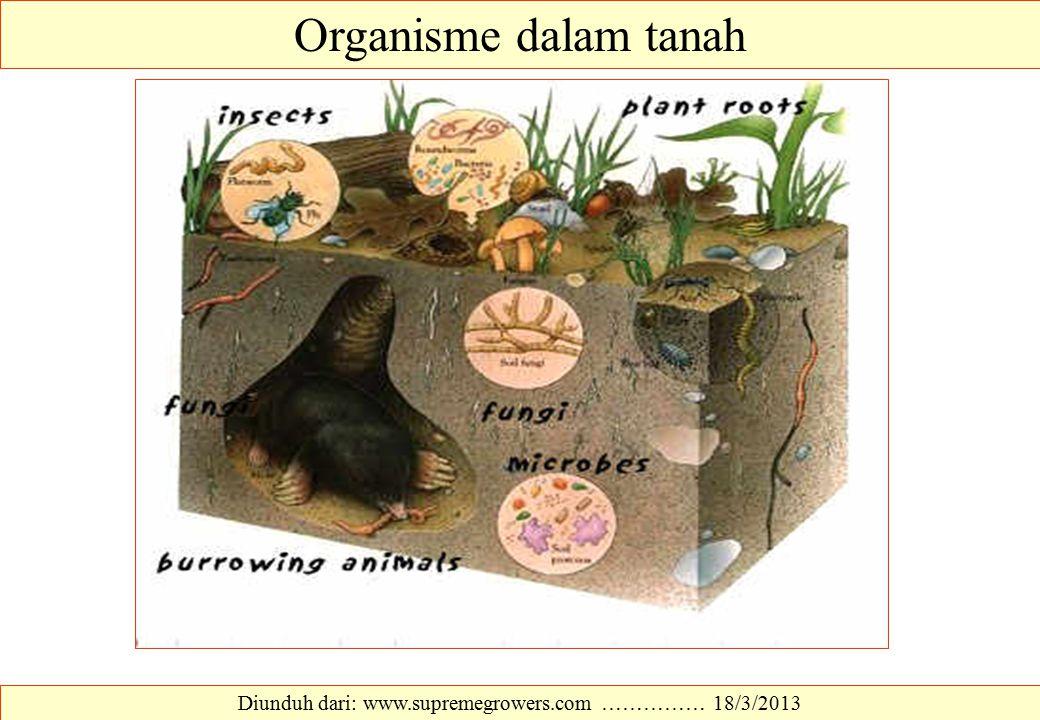 Organisme dalam tanah Diunduh dari: www.supremegrowers.com …………… 18/3/2013