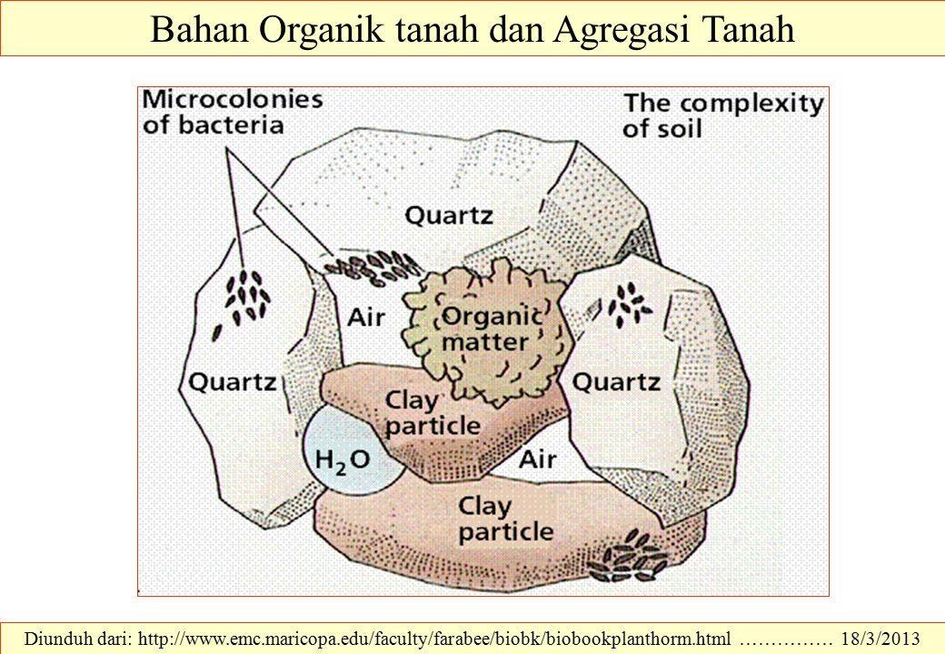 Bahan Organik tanah dan Agregasi Tanah Diunduh dari: http://www.emc.maricopa.edu/faculty/farabee/biobk/biobookplanthorm.html …………… 18/3/2013