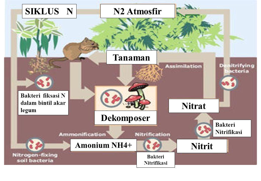 The nitrogen cycle SIKLUS N Nitrat Nitrit Amonium NH4+ Tanaman N2 Atmosfir Dekomposer Bakteri Nitrifikasi Bakteri fiksasi N dalam bintil akar legum Ba