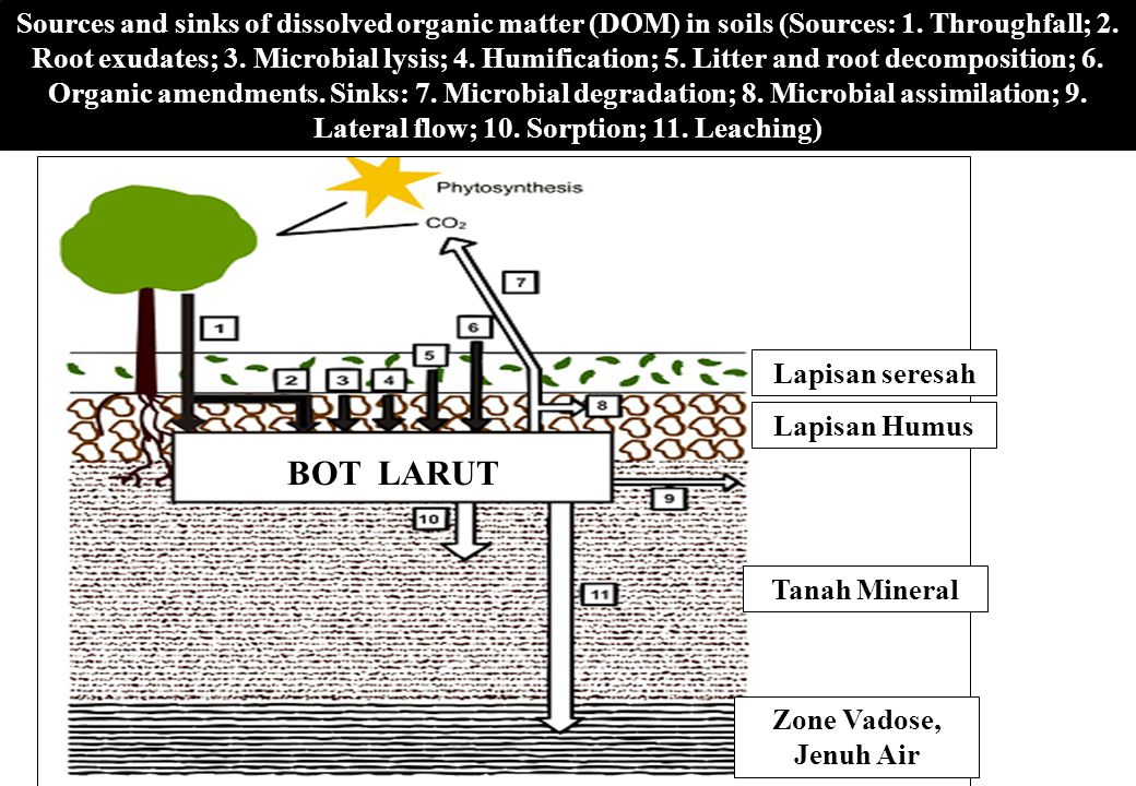 Sources and sinks of dissolved organic matter (DOM) in soils (Sources: 1.