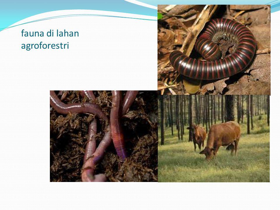fauna di lahan agroforestri
