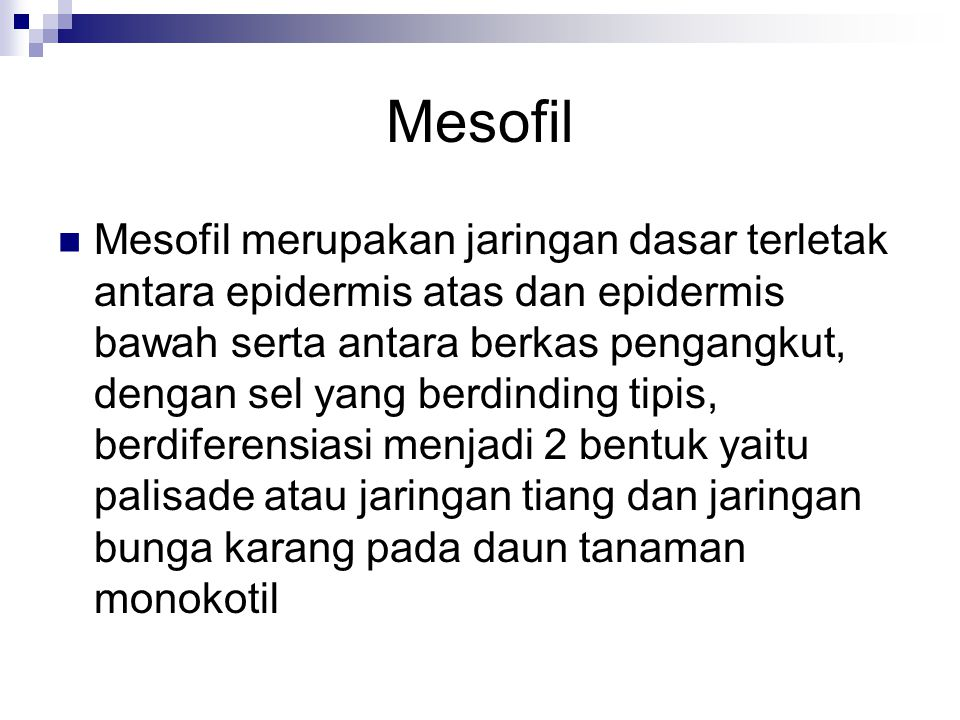 Mesofil Mesofil merupakan jaringan dasar terletak antara epidermis atas dan epidermis bawah serta antara berkas pengangkut, dengan sel yang berdinding