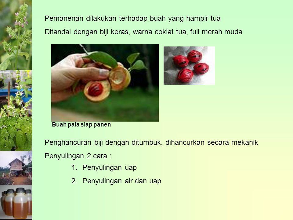 Pemanenan dilakukan terhadap buah yang hampir tua Ditandai dengan biji keras, warna coklat tua, fuli merah muda Buah pala siap panen Penghancuran biji dengan ditumbuk, dihancurkan secara mekanik Penyulingan 2 cara : 1.Penyulingan uap 2.Penyulingan air dan uap