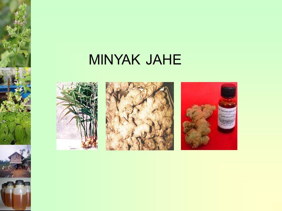 MINYAK JAHE