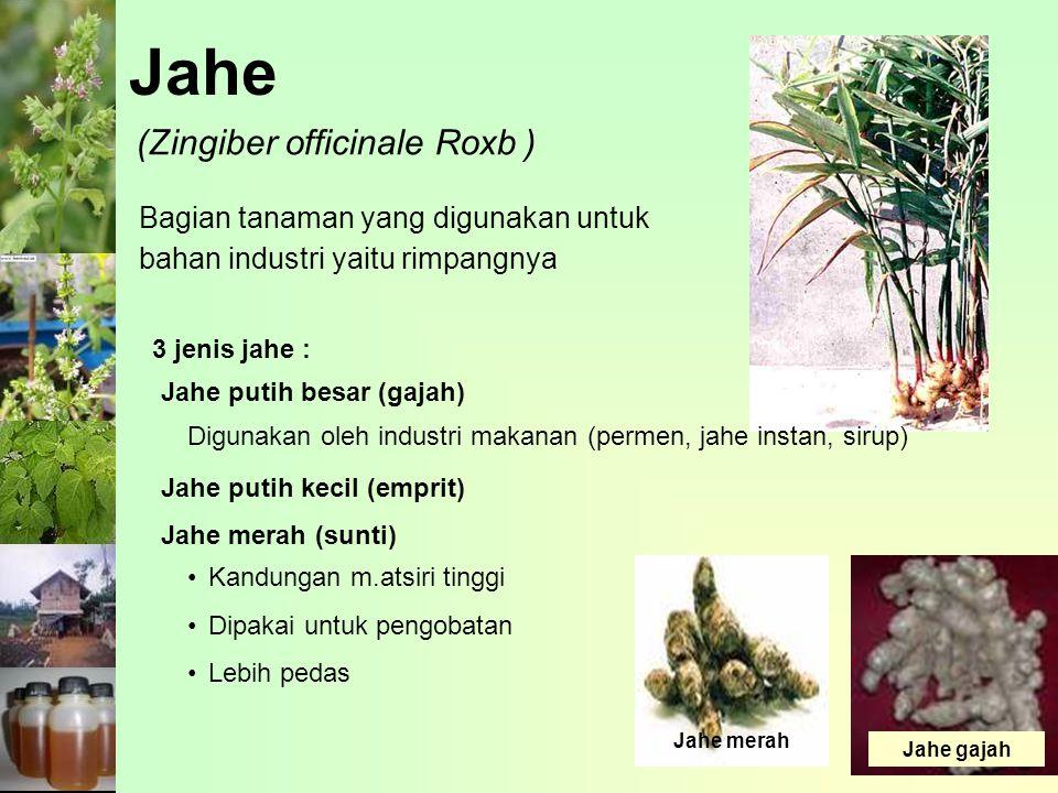 Jahe Bagian tanaman yang digunakan untuk bahan industri yaitu rimpangnya (Zingiber officinale Roxb ) 3 jenis jahe : Jahe putih besar (gajah) Jahe puti