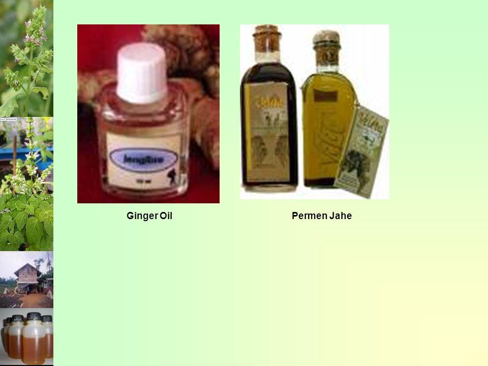 Ginger OilPermen Jahe