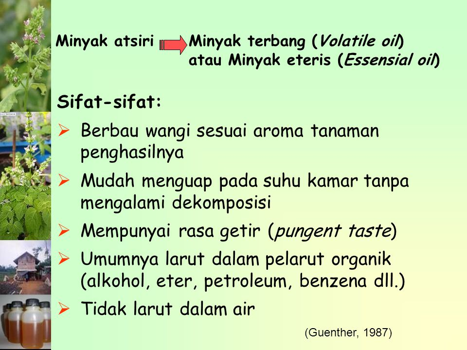 Minyak Atsiri Kayu Manis Dihasilkan dari penyulingan kulit ranting dan daun kayu manis Jenis minyak kayu manis yang diperdagangkan didasarkan pada asal bahan dan jenis kayu manis Cinnamon leaf oil : daun C.