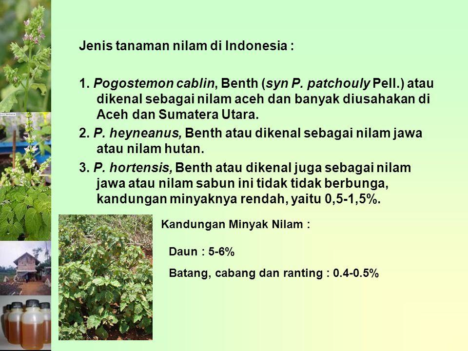 Jenis tanaman nilam di Indonesia : 1.Pogostemon cablin, Benth (syn P.
