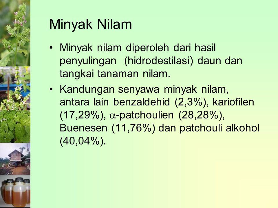 Minyak nilam diperoleh dari hasil penyulingan (hidrodestilasi) daun dan tangkai tanaman nilam.