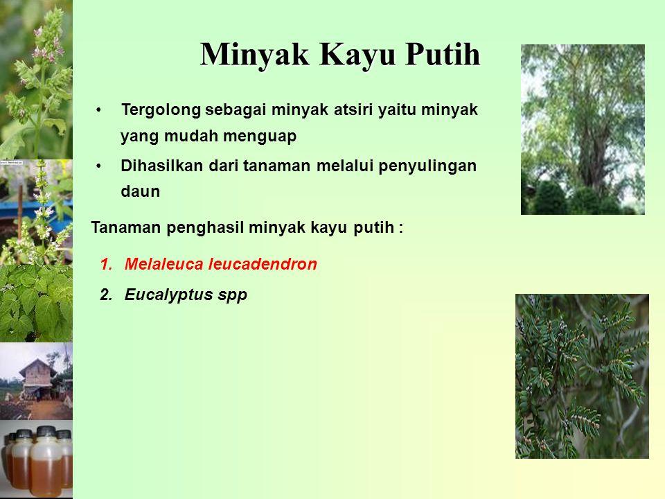 Minyak Kayu Putih Tergolong sebagai minyak atsiri yaitu minyak yang mudah menguap Dihasilkan dari tanaman melalui penyulingan daun Tanaman penghasil minyak kayu putih : 1.Melaleuca leucadendron 2.Eucalyptus spp