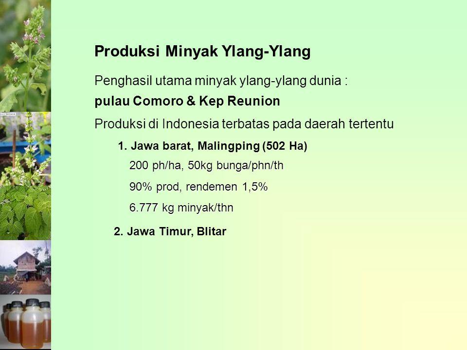 Produksi Minyak Ylang-Ylang 1. Jawa barat, Malingping (502 Ha) 2. Jawa Timur, Blitar 200 ph/ha, 50kg bunga/phn/th 90% prod, rendemen 1,5% 6.777 kg min