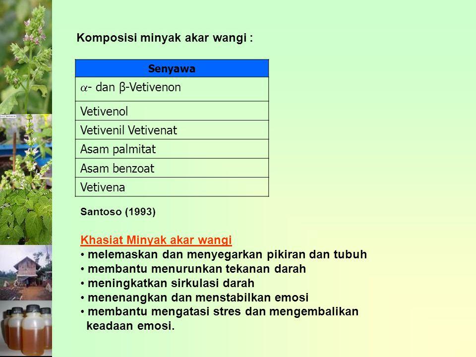 Komposisi minyak akar wangi : Senyawa  - dan β-Vetivenon Vetivenol Vetivenil Vetivenat Asam palmitat Asam benzoat Vetivena Santoso (1993) Khasiat Min