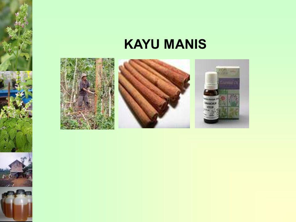KAYU MANIS