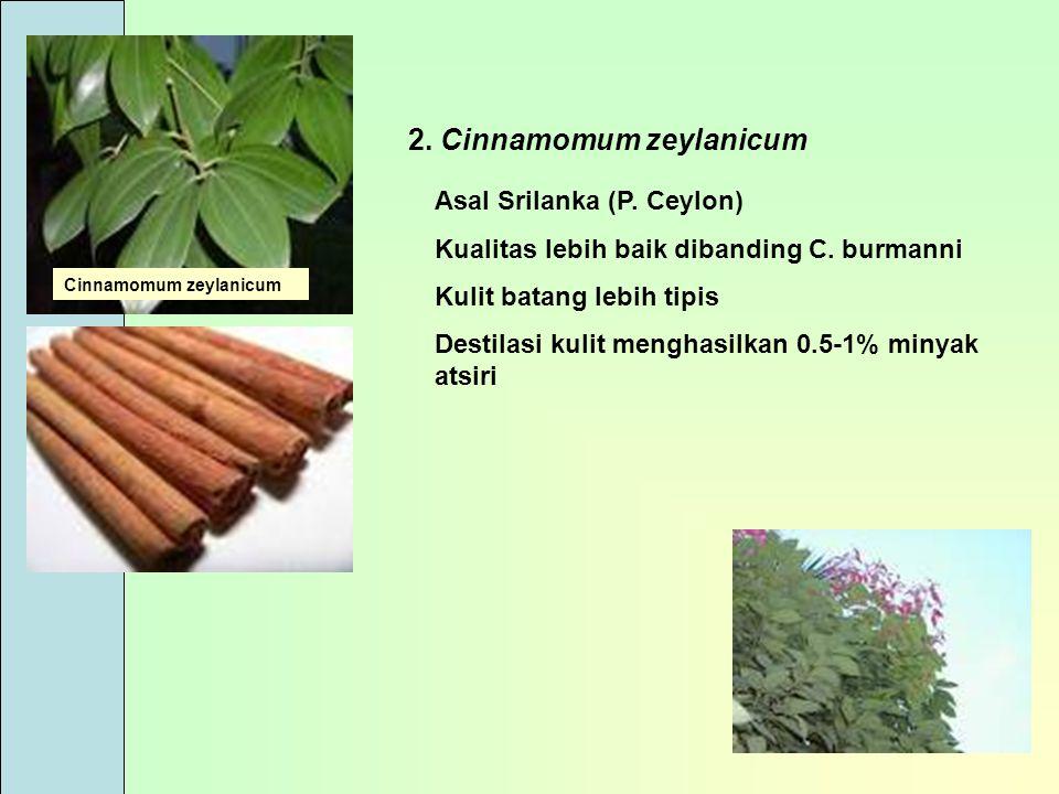 2. Cinnamomum zeylanicum Asal Srilanka (P. Ceylon) Kualitas lebih baik dibanding C. burmanni Kulit batang lebih tipis Destilasi kulit menghasilkan 0.5