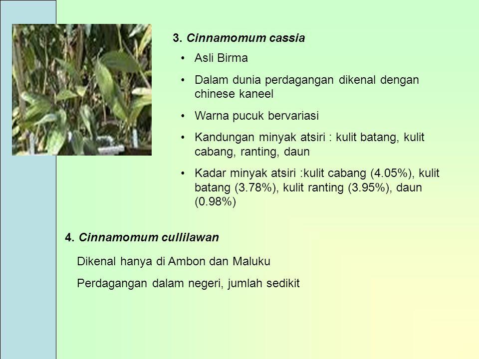 3. Cinnamomum cassia Asli Birma Dalam dunia perdagangan dikenal dengan chinese kaneel Warna pucuk bervariasi Kandungan minyak atsiri : kulit batang, k
