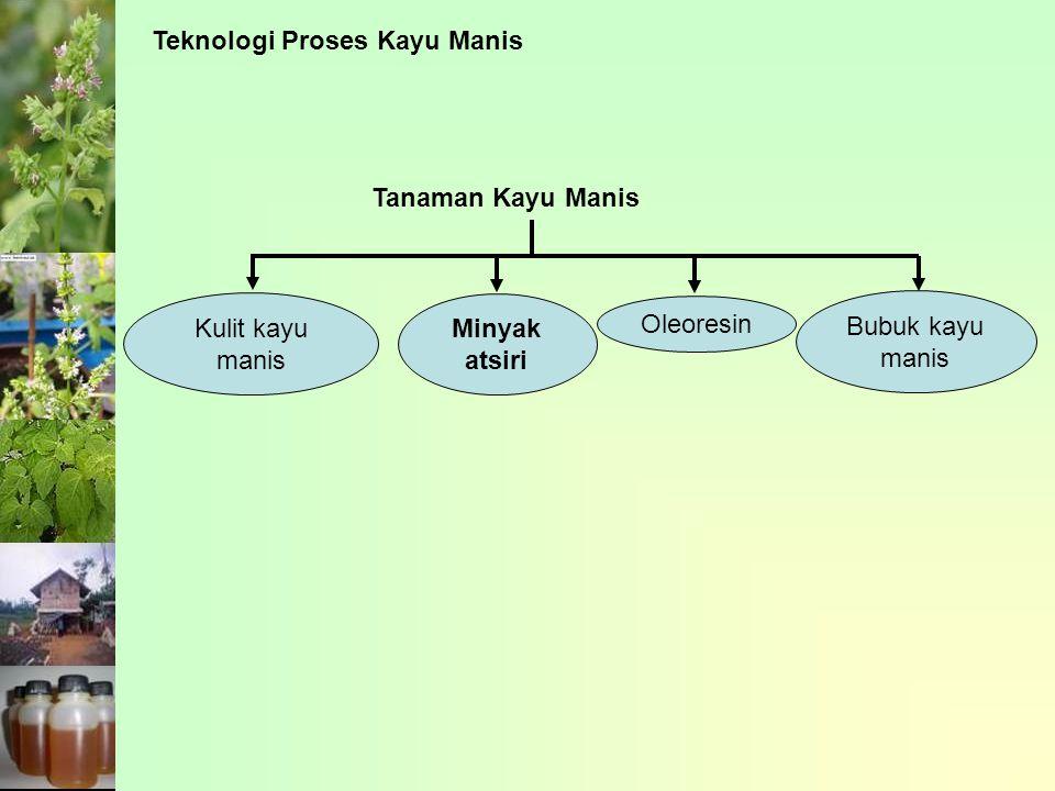 Teknologi Proses Kayu Manis Tanaman Kayu Manis Kulit kayu manis Minyak atsiri Oleoresin Bubuk kayu manis