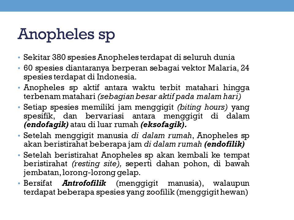 Anopheles sp Sekitar 380 spesies Anopheles terdapat di seluruh dunia 60 spesies diantaranya berperan sebagai vektor Malaria, 24 spesies terdapat di In