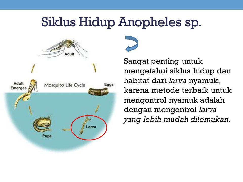 Siklus Hidup Anopheles sp. Sangat penting untuk mengetahui siklus hidup dan habitat dari larva nyamuk, karena metode terbaik untuk mengontrol nyamuk a