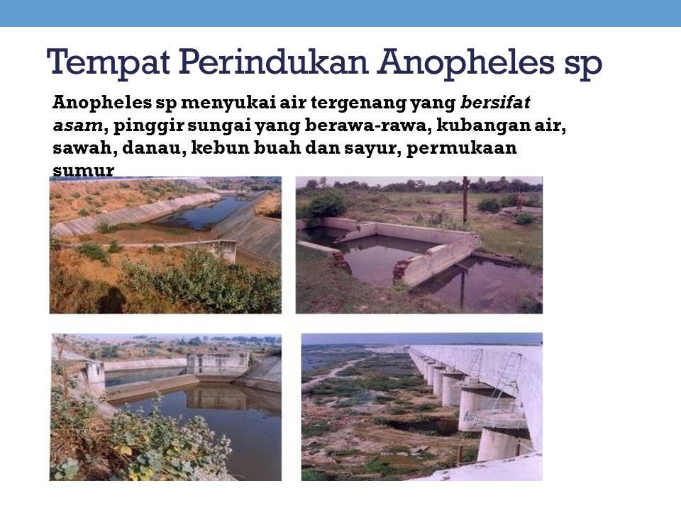 Tempat Perindukan Anopheles sp Anopheles sp menyukai air tergenang yang bersifat asam, pinggir sungai yang berawa-rawa, kubangan air, sawah, danau, ke