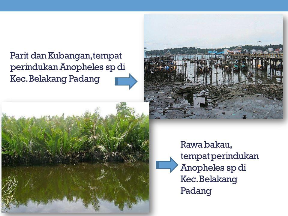 Parit dan Kubangan, tempat perindukan Anopheles sp di Kec. Belakang Padang Rawa bakau, tempat perindukan Anopheles sp di Kec. Belakang Padang