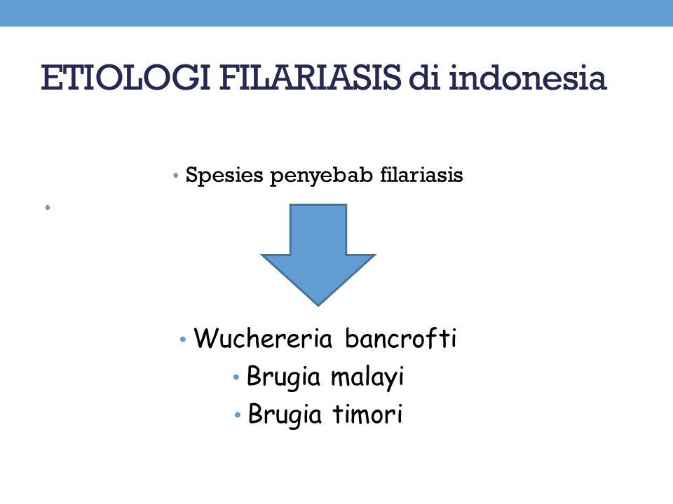 ETIOLOGI FILARIASIS di indonesia Spesies penyebab filariasis Wuchereria bancrofti Brugia malayi Brugia timori