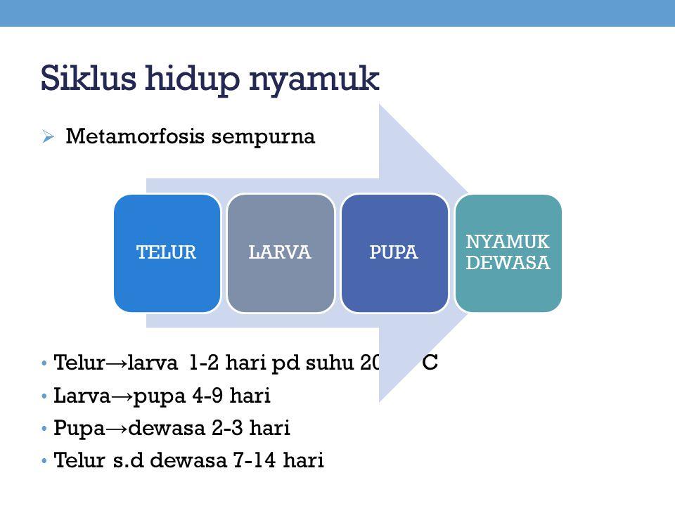 Siklus hidup nyamuk  Metamorfosis sempurna Telur → larva 1-2 hari pd suhu 20-40'C Larva → pupa 4-9 hari Pupa → dewasa 2-3 hari Telur s.d dewasa 7-14