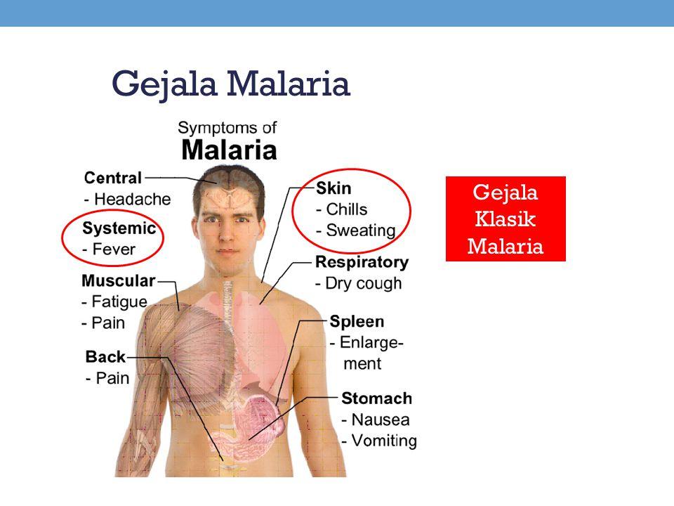 Gejala Malaria Gejala Klasik Malaria