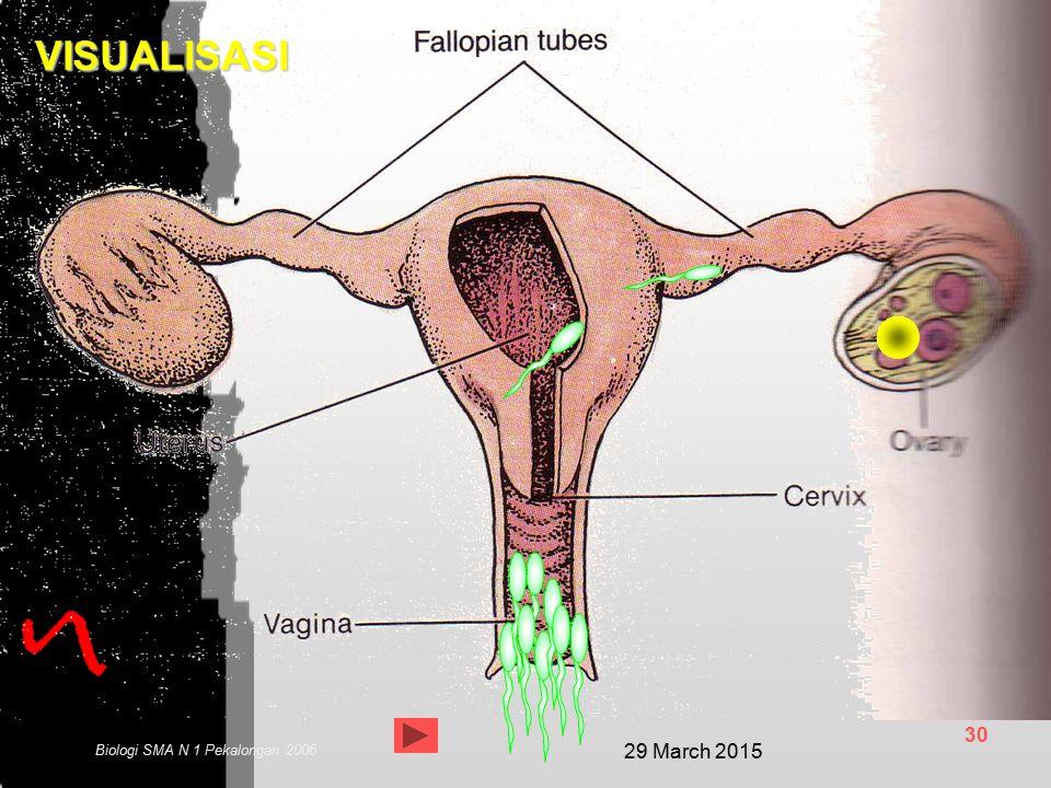 29 March 2015 29 Biologi SMA N 1 Pekalongan 2006 PROSES PERKEMBANGAN EMBRIO DALAM KANDUNGAN Waktu kehamilan manusia rata-rata 266 hari atau 38 minggu