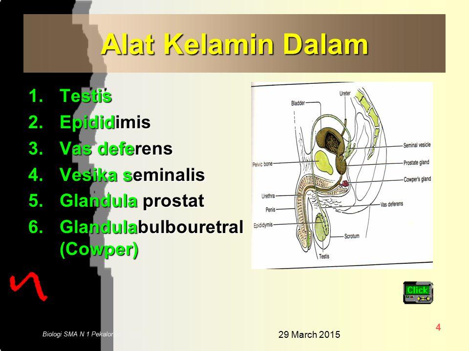 29 March 2015 14 Biologi SMA N 1 Pekalongan 2006 Ureter Saluran yang menghubungkan ruang ginjal dengan kandung kemih Uretra Yaitu saluran untuk keluarnya semen, sperma dan urin
