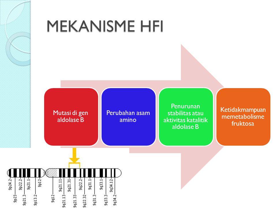 MEKANISME HFI Mutasi di gen aldolase B Perubahan asam amino Penurunan stabilitas atau aktivitas katalitik aldolase B Ketidakmampuan memetabolisme fruk