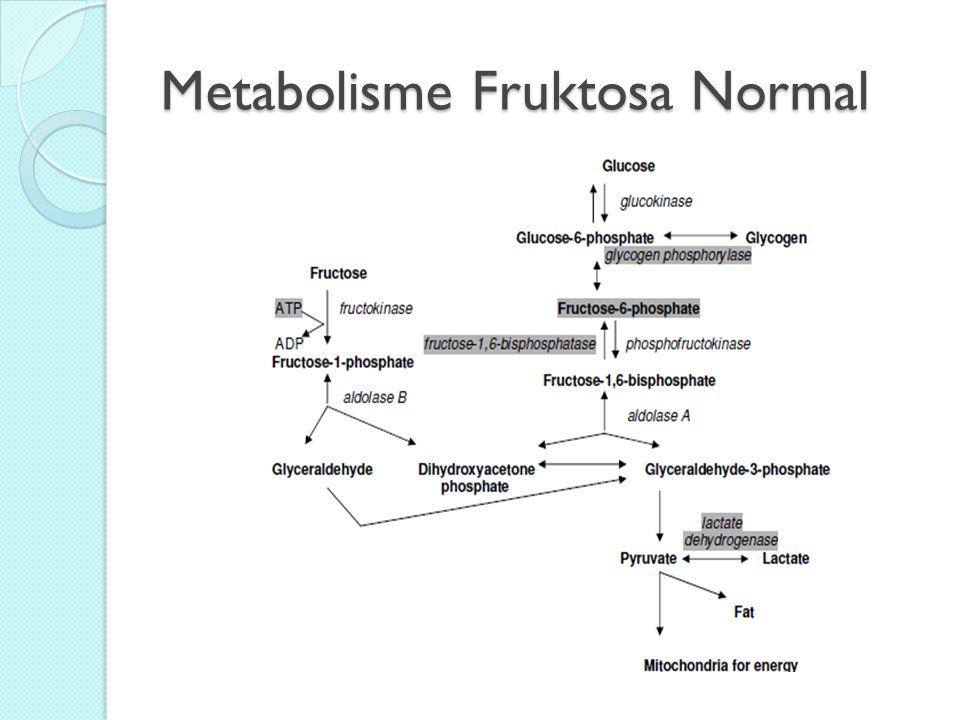Metabolisme Fruktosa Normal