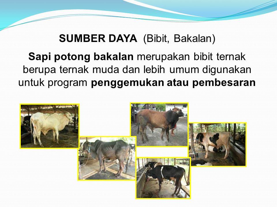 SUMBER DAYA (Bibit, Bakalan) Sapi potong bakalan merupakan bibit ternak berupa ternak muda dan lebih umum digunakan untuk program penggemukan atau pem