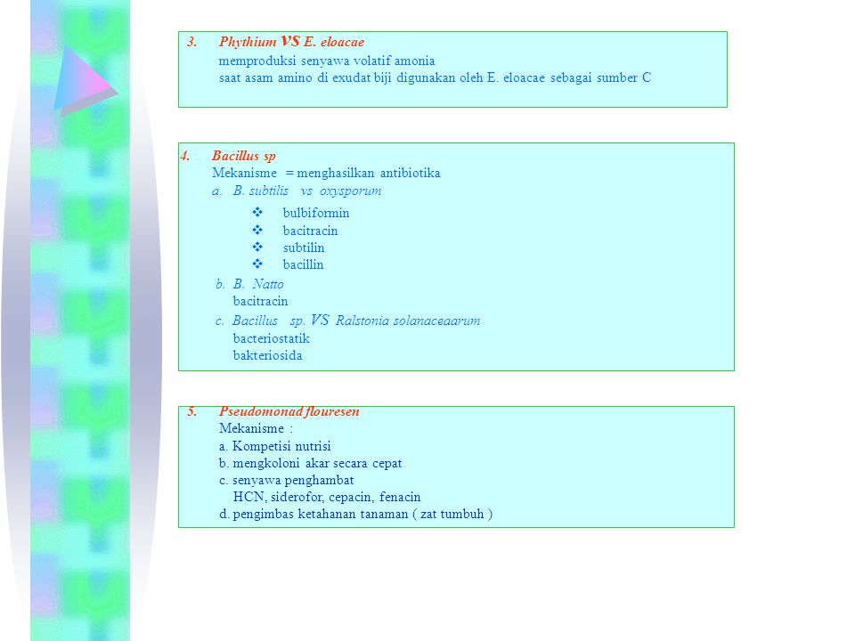 3.Phythium vs E. eloacae memproduksi senyawa volatif amonia saat asam amino di exudat biji digunakan oleh E. eloacae sebagai sumber C 5.Pseudomonad fl