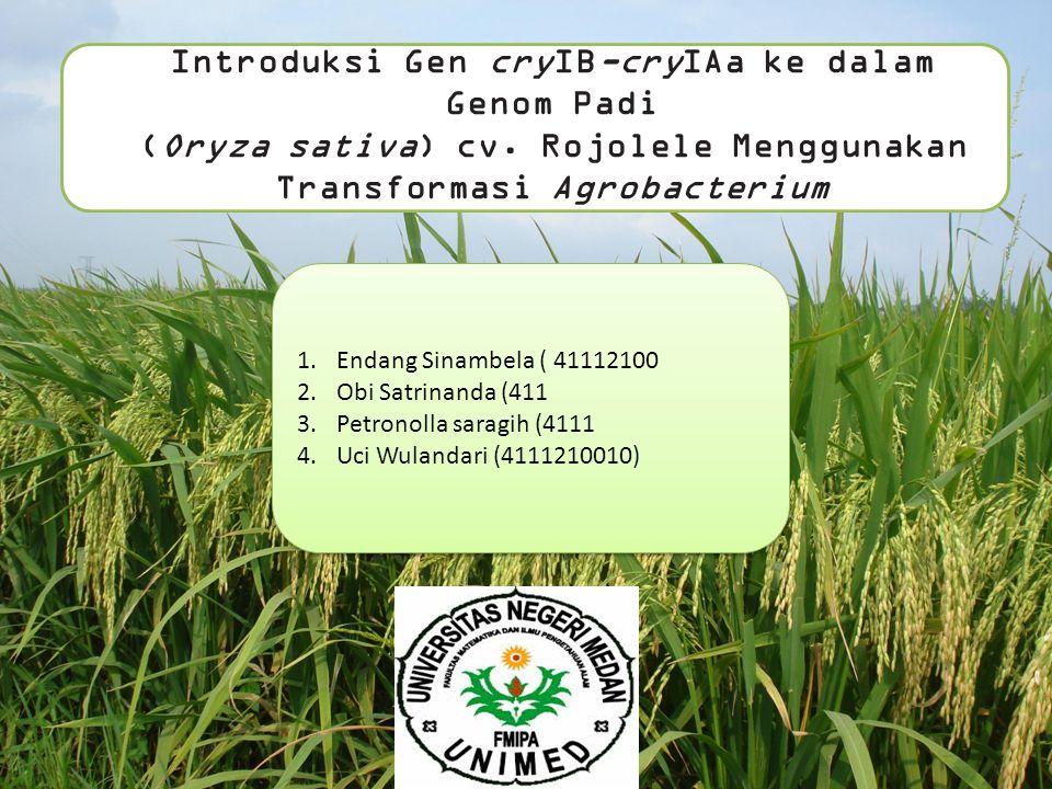 Introduksi Gen cryIB-cryIAa ke dalam Genom Padi (Oryza sativa) cv.