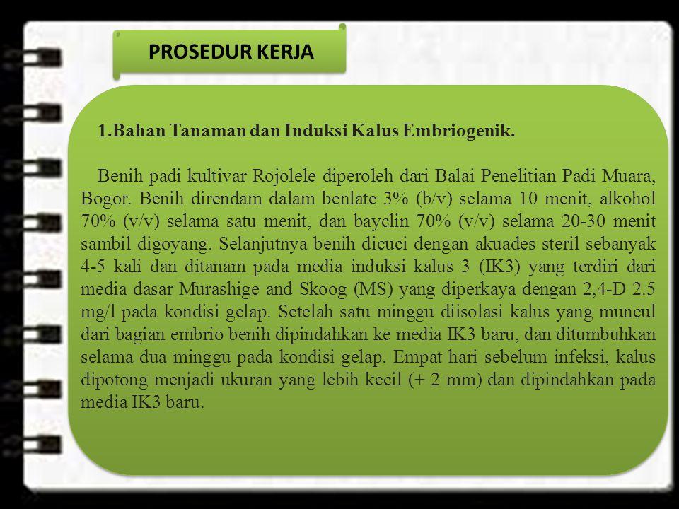 PROSEDUR KERJA 1.Bahan Tanaman dan Induksi Kalus Embriogenik.