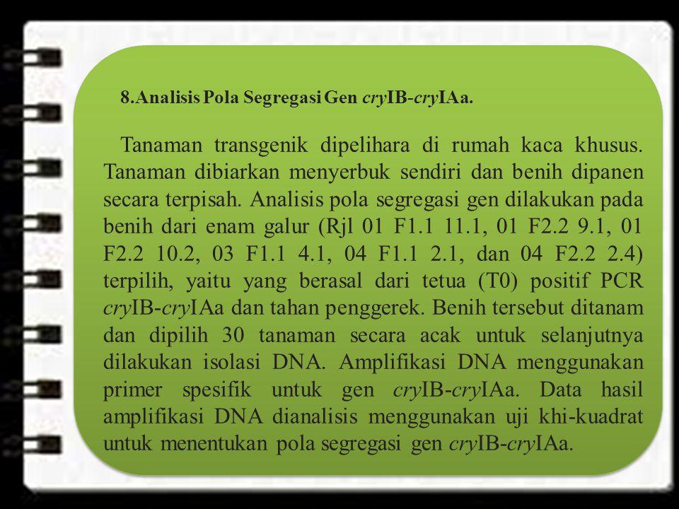 8.Analisis Pola Segregasi Gen cryIB-cryIAa.Tanaman transgenik dipelihara di rumah kaca khusus.
