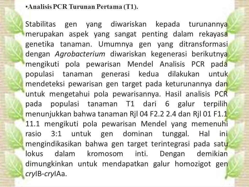 Analisis PCR Turunan Pertama (T1).