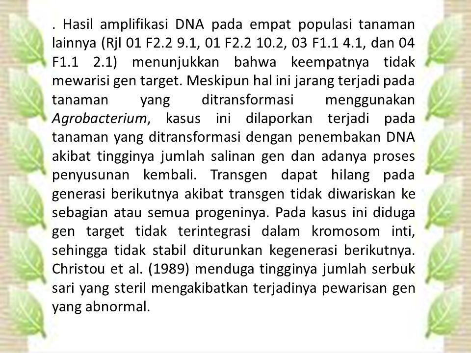 Hasil amplifikasi DNA pada empat populasi tanaman lainnya (Rjl 01 F2.2 9.1, 01 F2.2 10.2, 03 F1.1 4.1, dan 04 F1.1 2.1) menunjukkan bahwa keempatnya tidak mewarisi gen target.