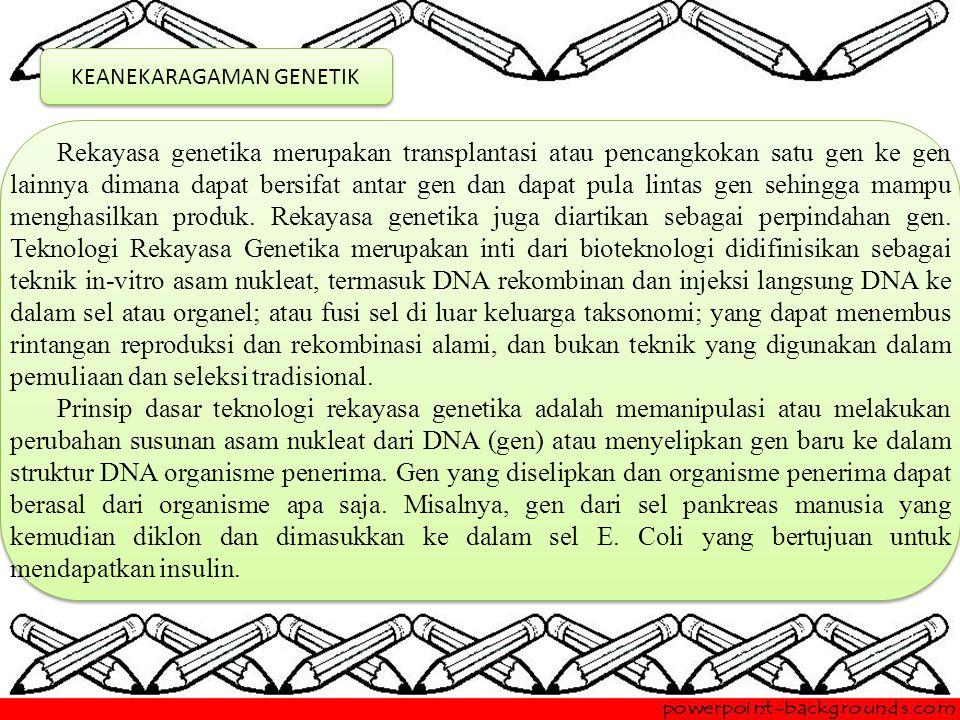 KEANEKARAGAMAN GENETIK Rekayasa genetika merupakan transplantasi atau pencangkokan satu gen ke gen lainnya dimana dapat bersifat antar gen dan dapat pula lintas gen sehingga mampu menghasilkan produk.