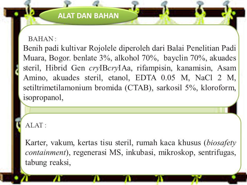 BAHAN : Benih padi kultivar Rojolele diperoleh dari Balai Penelitian Padi Muara, Bogor.