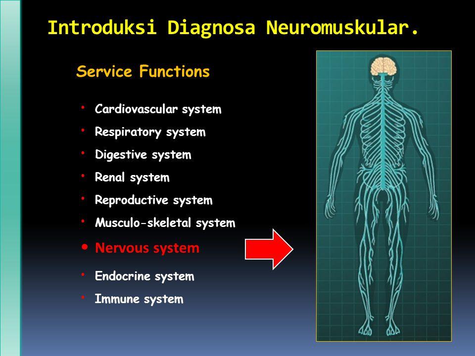 Introduksi Diagnosa Neuromuskular. Service Functions Cardiovascular system Respiratory system Digestive system Renal system Reproductive system Muscul