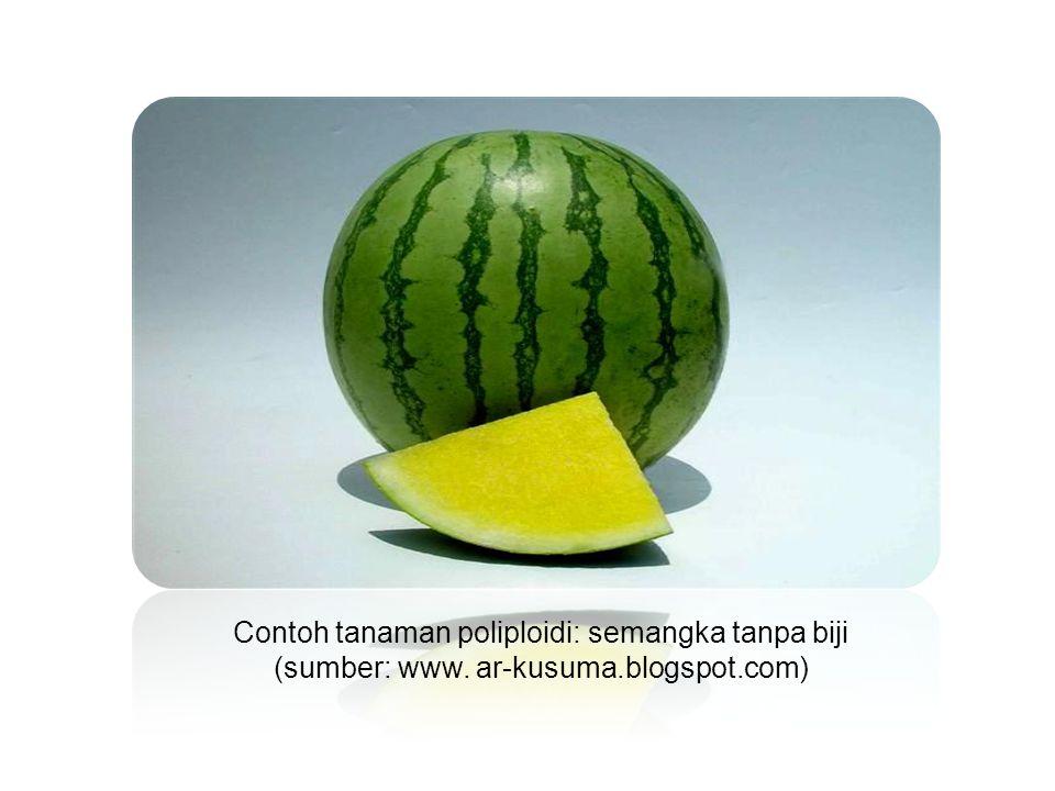 Contoh tanaman poliploidi: semangka tanpa biji (sumber: www. ar-kusuma.blogspot.com)